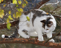 cat_in_tree