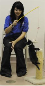 cat_training