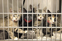 overcrowded_cat_shelter_2